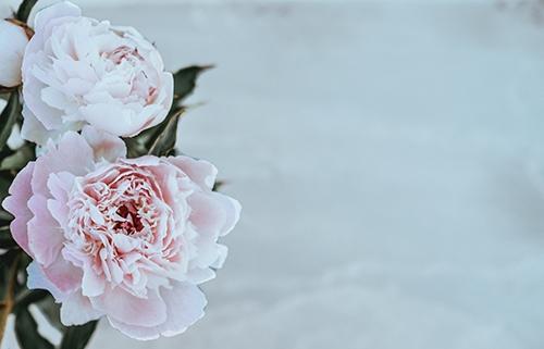 Хризантемы - срезка